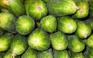 Куча зеленых огурцов производства «Грин-ПИКъ»